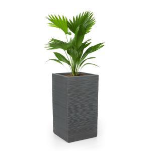 Luxflor Vaso de plantas 35 x 65 x 35 cm Fibra de vidro interna/externa cinza escuro 35 x 65 x 35 cm