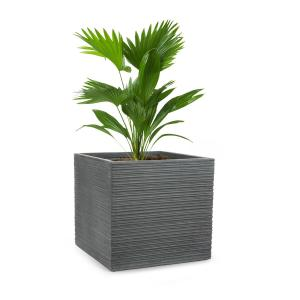 Luxflor Vaso de plantas 55 x 50 x 55 cm Fibra de vidro interna/externa cinza escuro 55 x 50 x 55 cm